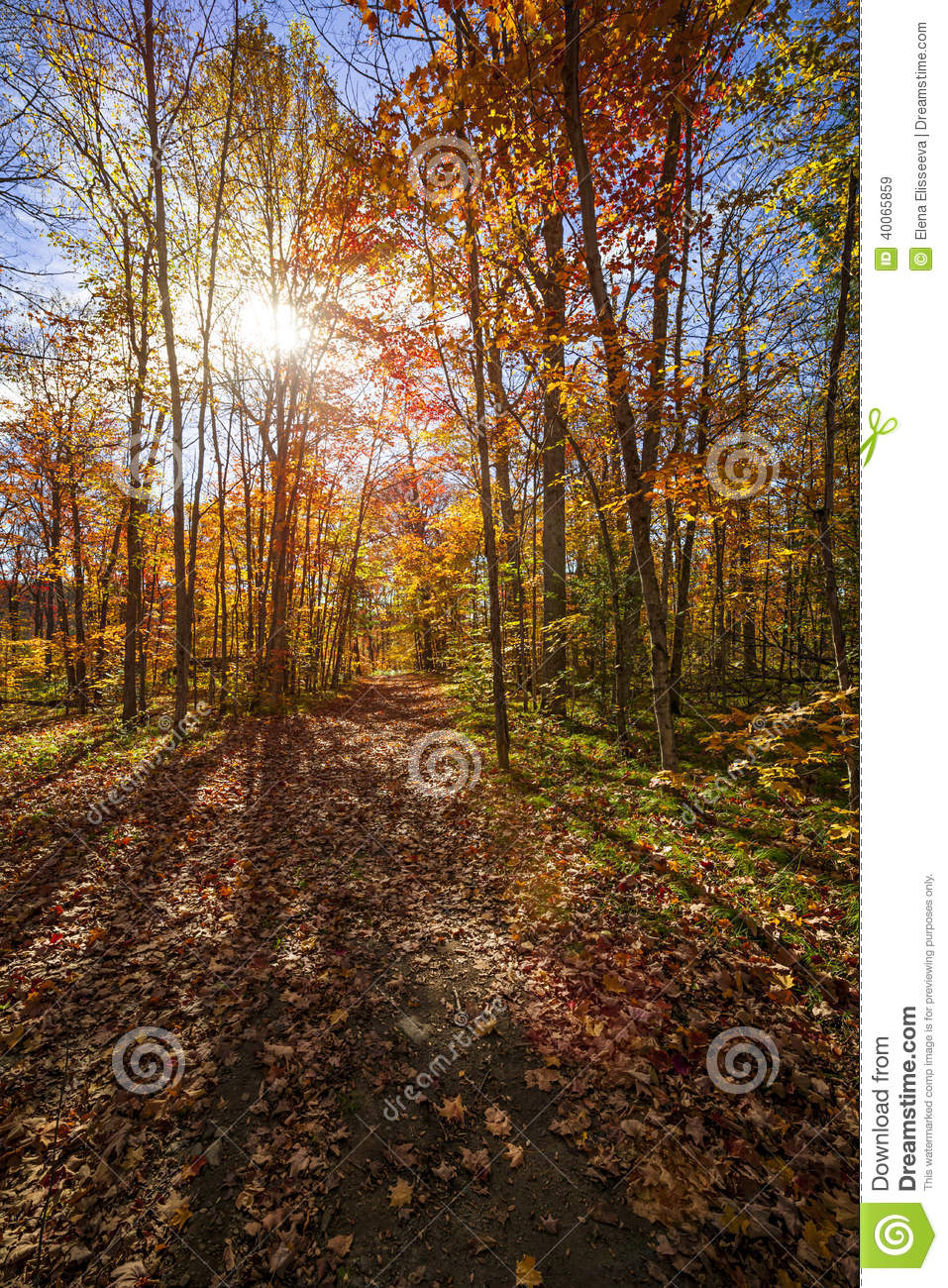 West Virginia Railroad Bridge additionally Sunshine Fall Forest Sun Shining Colorful Leaves Autumn Trees Hiking Trail Algonquin Park Ontario Canada in addition Tree likewise Lanterns Tree Some Lit Against Moonlight Twilight Night Sky as well Qatar. on free vector trees