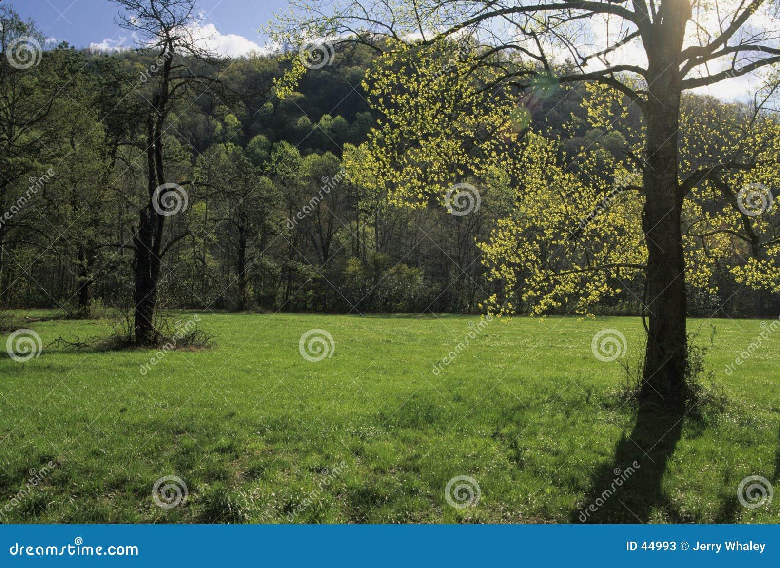 Sunshine, Tree, Meadow