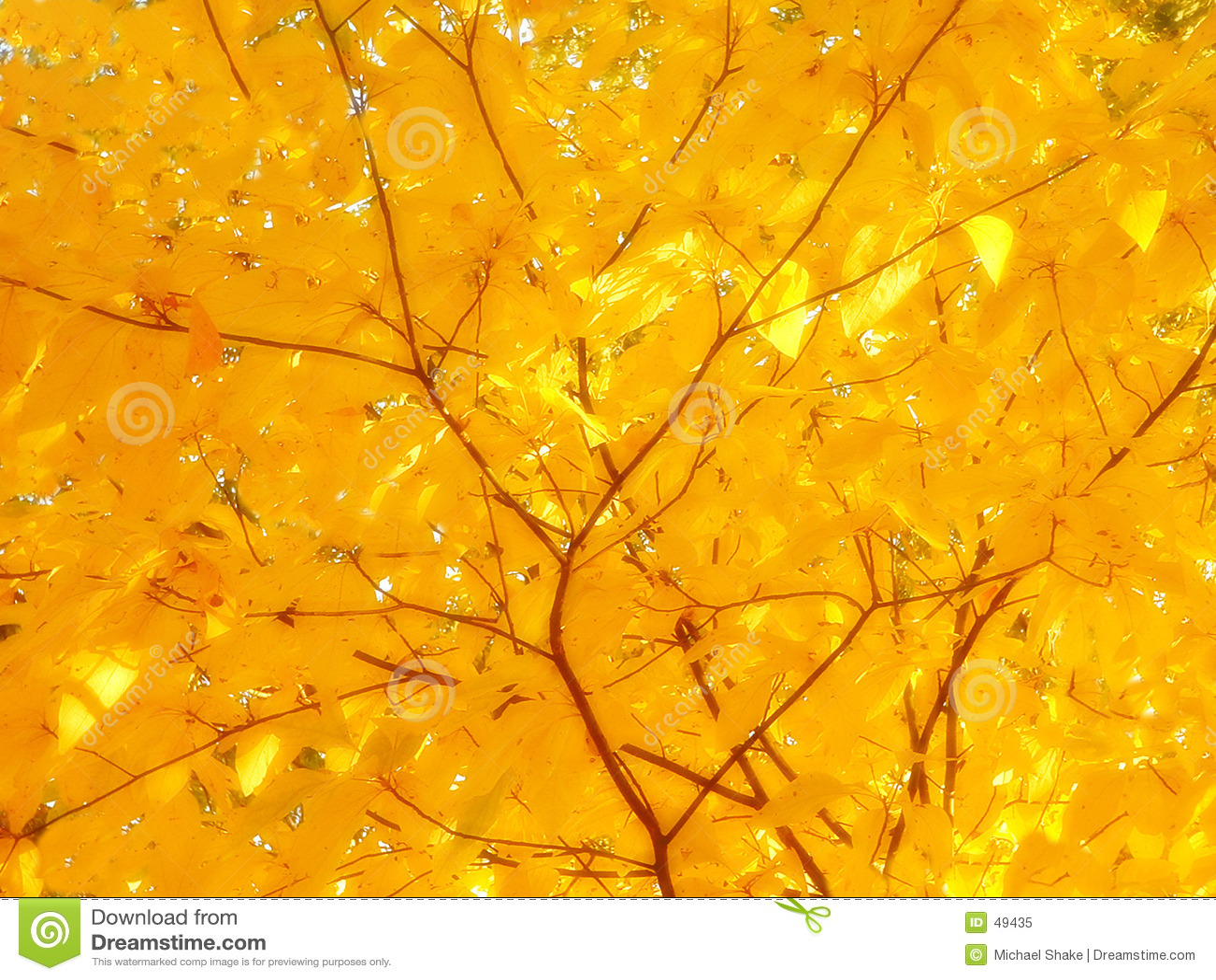 Sunshine on yellow leaves