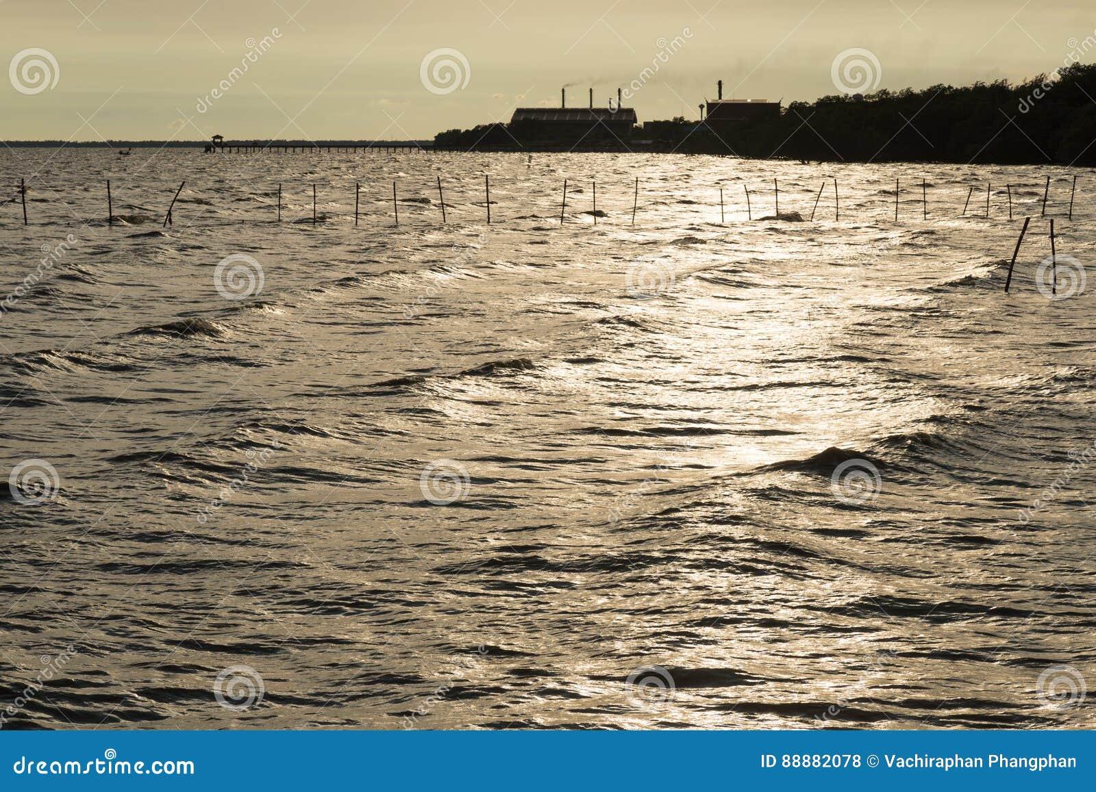 Sunshines在海