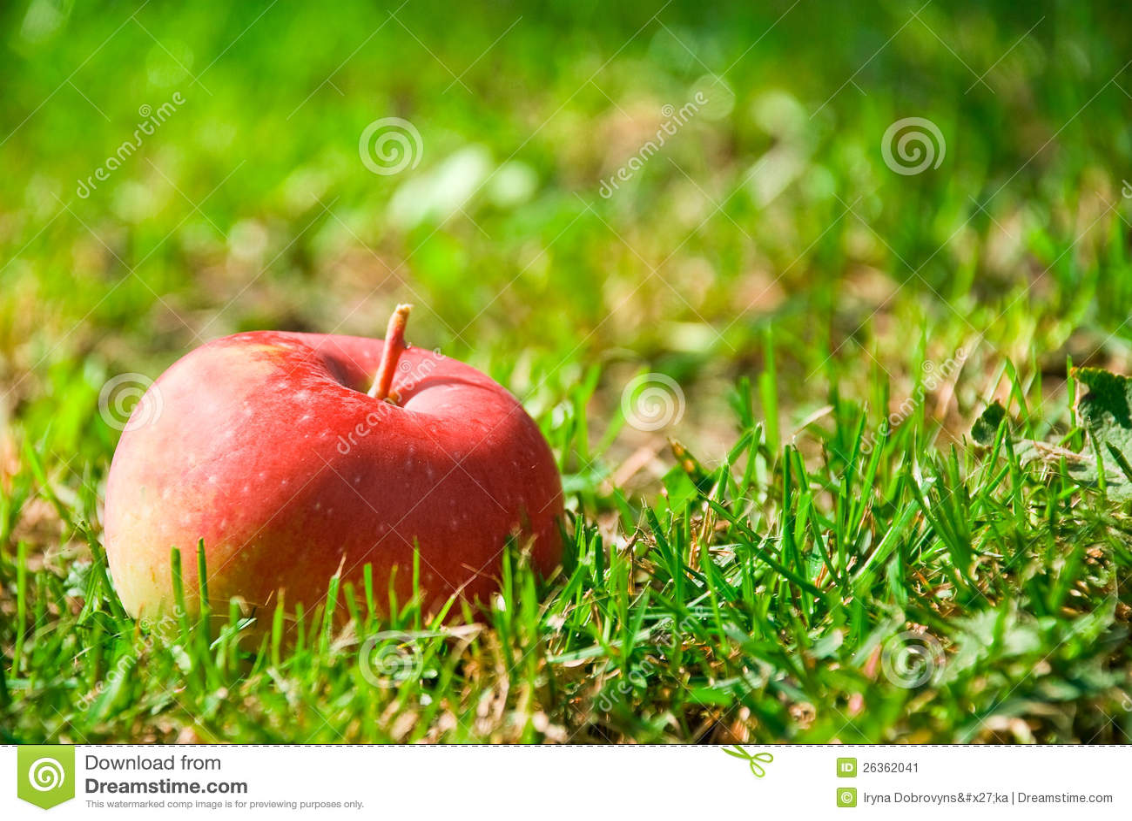 Sunt rött äpple