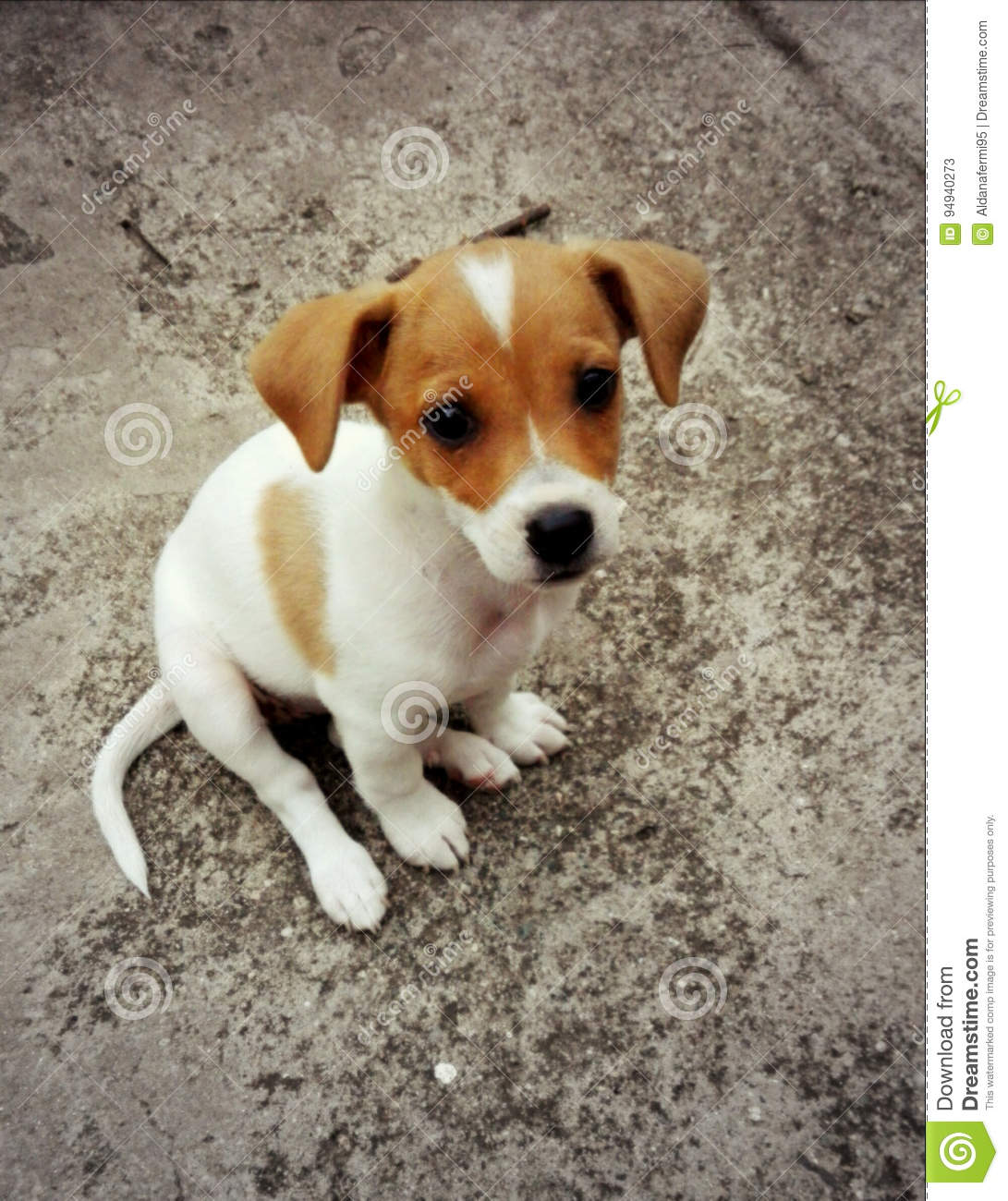 Super Cute Puppy Stock Image Image Of Animals Look 94940273