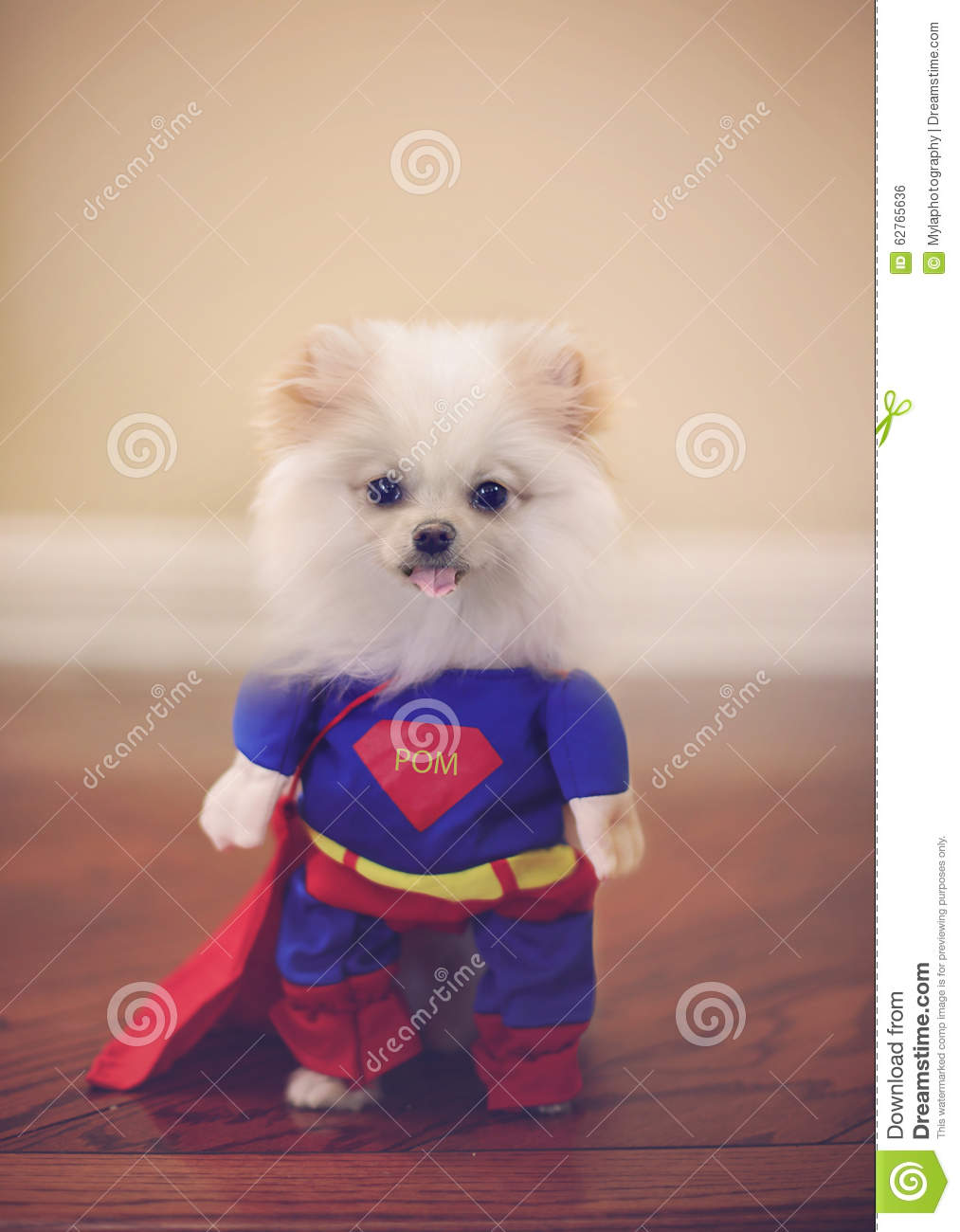 Small Dog Superman Cape