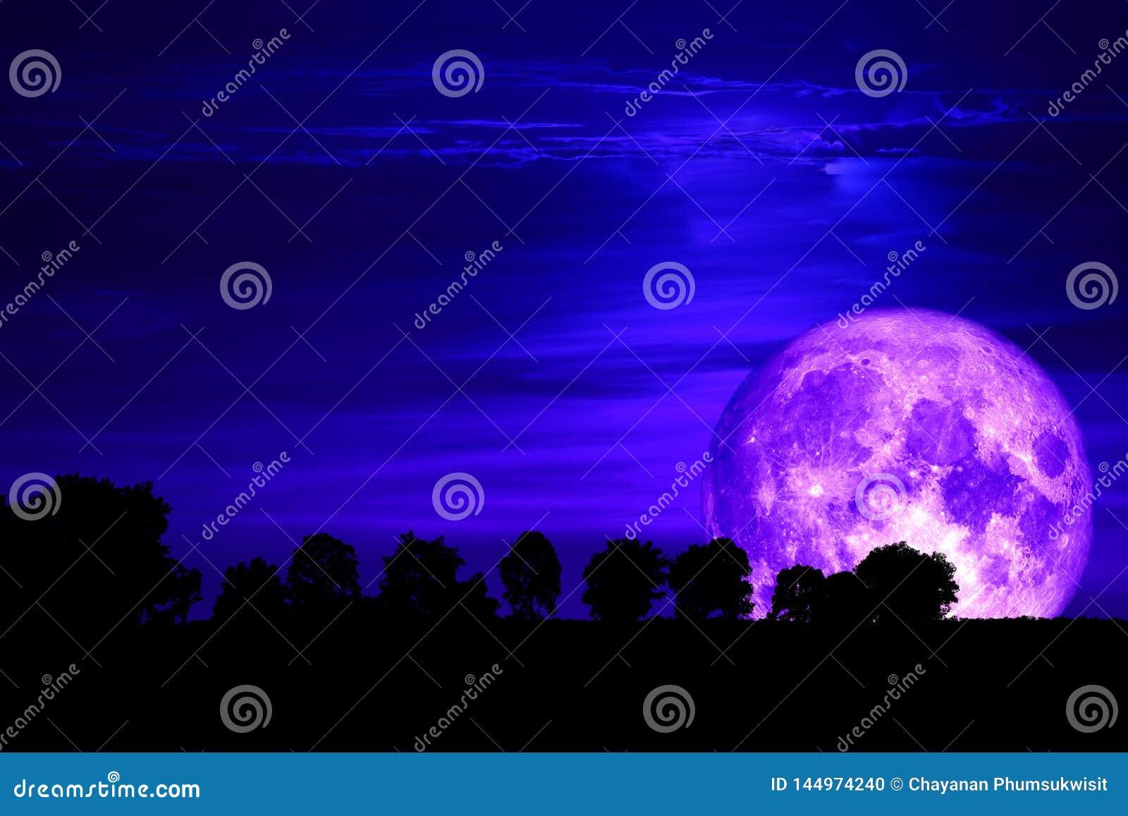 super purple snow moon back silhouette tree on dark sky