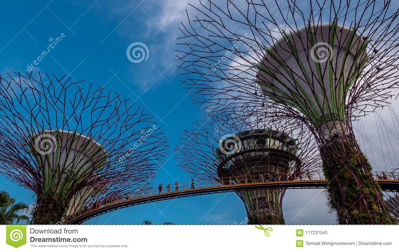Download comp & Super-tree Park Is Landmark Singapore At Day. Cityscape Is Colorful ...