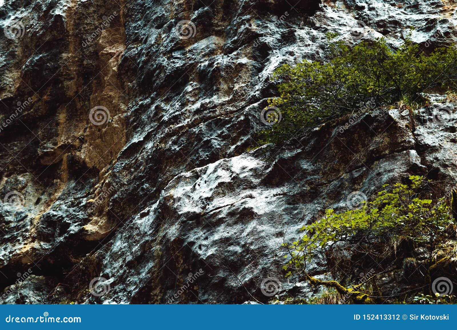 Superfície molhada do muscose nas montanhas da Abkhásia