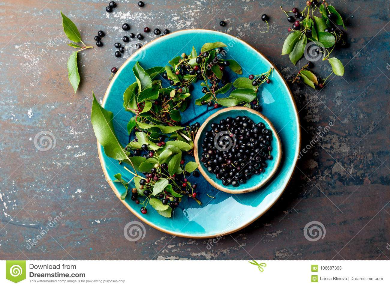16 Maqui Berry Photos Free Royalty Free Stock Photos From