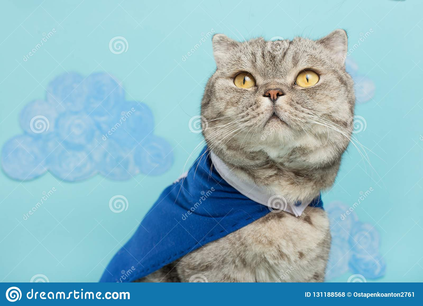 superhero cat, in a blue raincoat