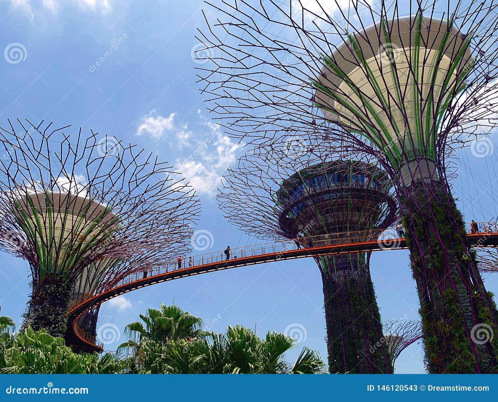 Supertrees und Skyway an den G?rten durch die Bucht in Singaopre