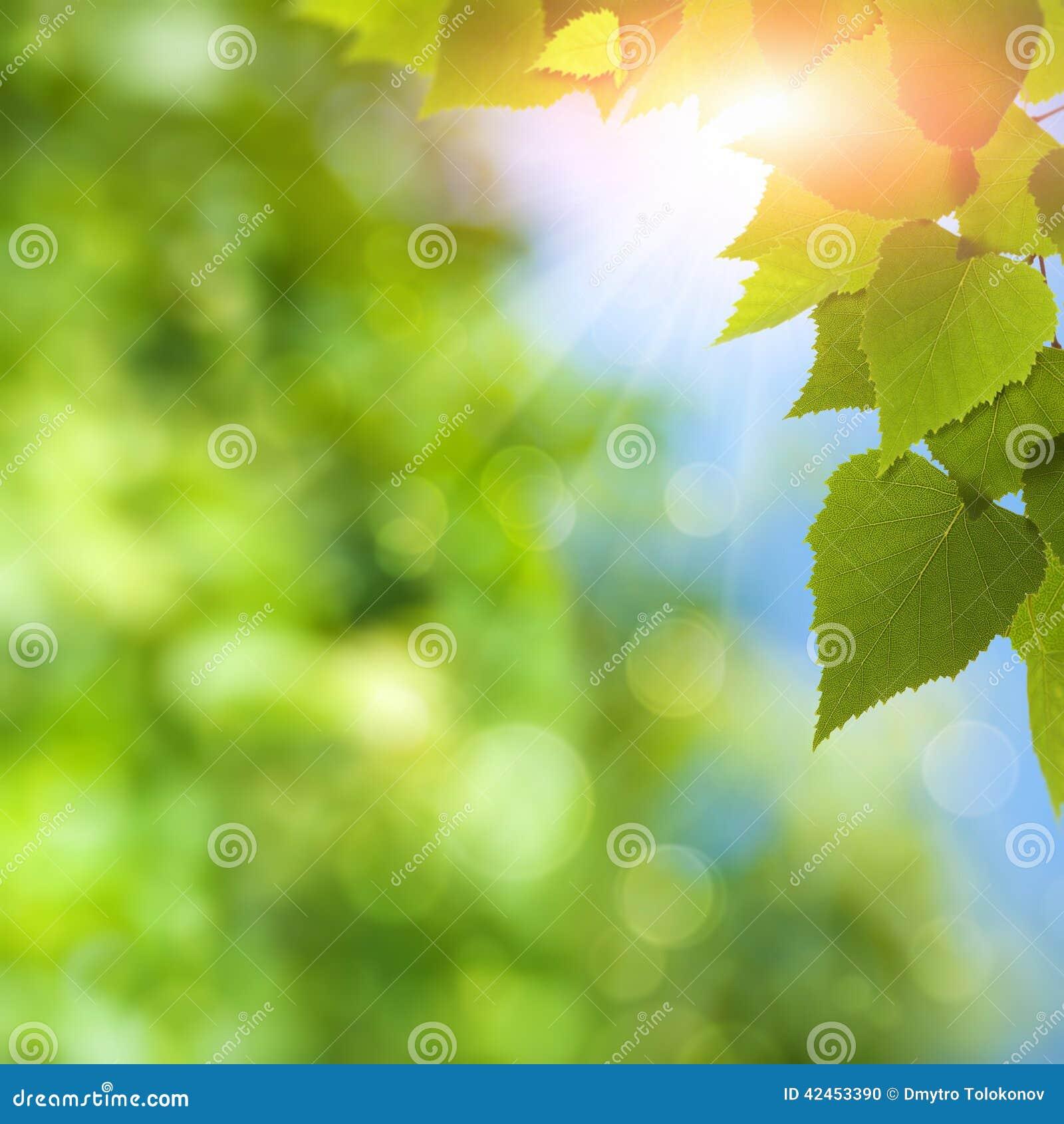 Suppengrün unter heller Sommersonne