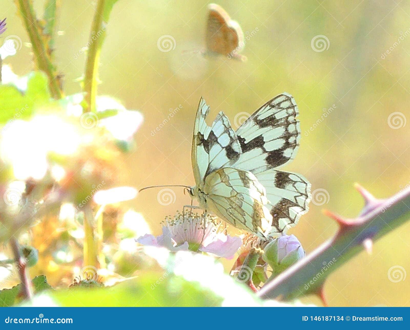 Support coloré de papillon aux usines