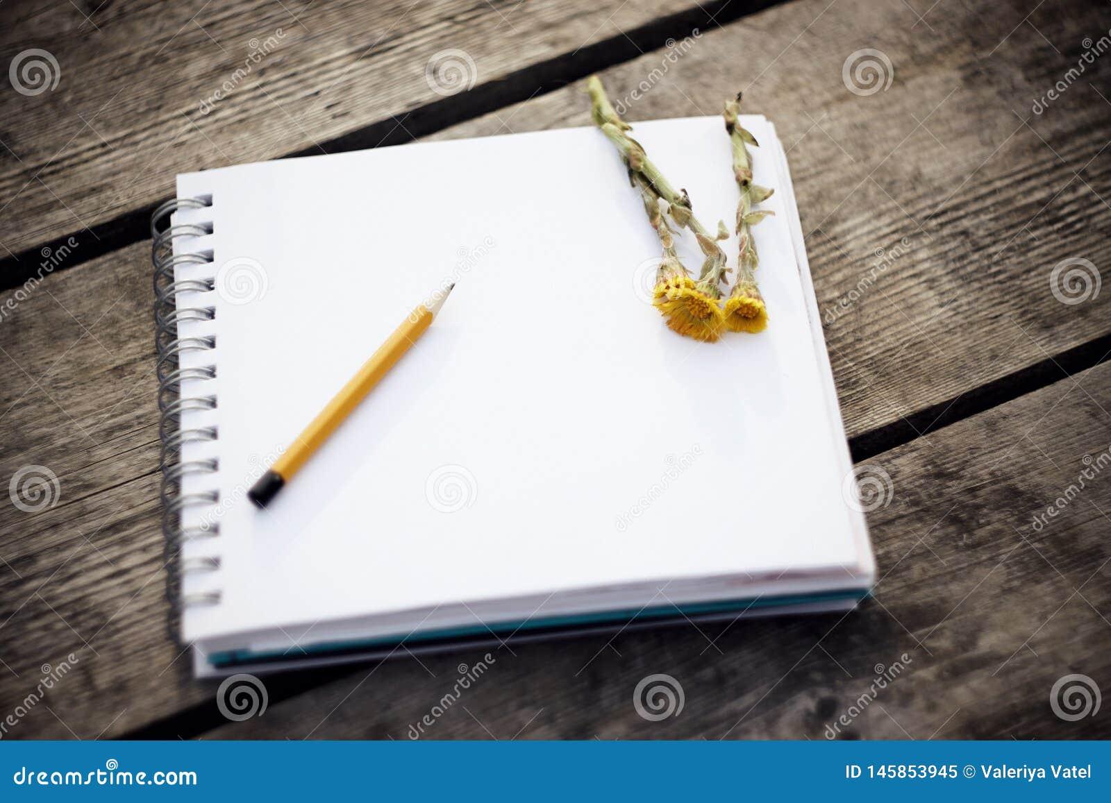 Sur la table il y a un carnet, un crayon et coltsfoot jaune de fleurs