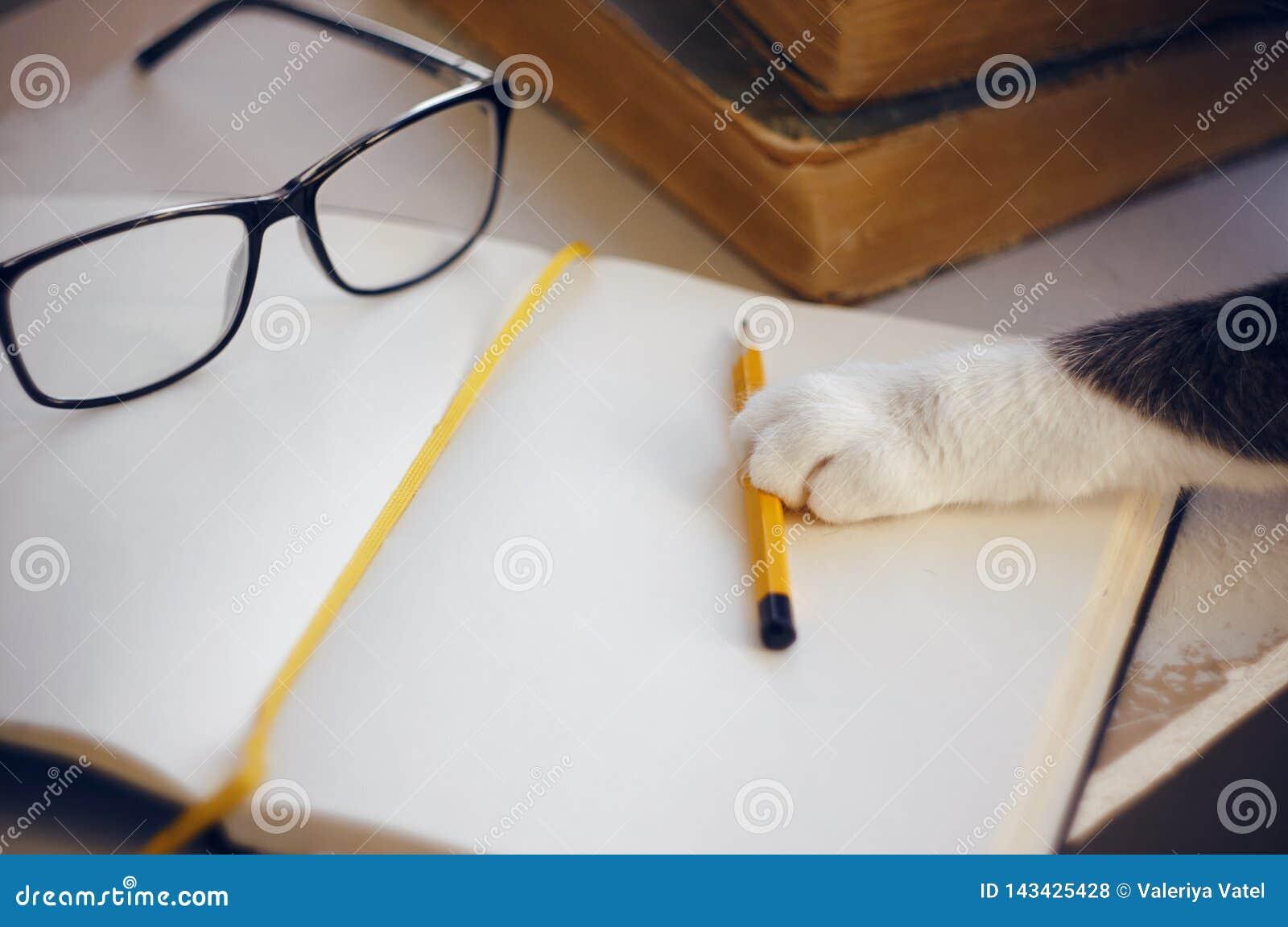 Sur la table sont les verres, un crayon et un carnet, chat atteint pour un crayon avec sa patte