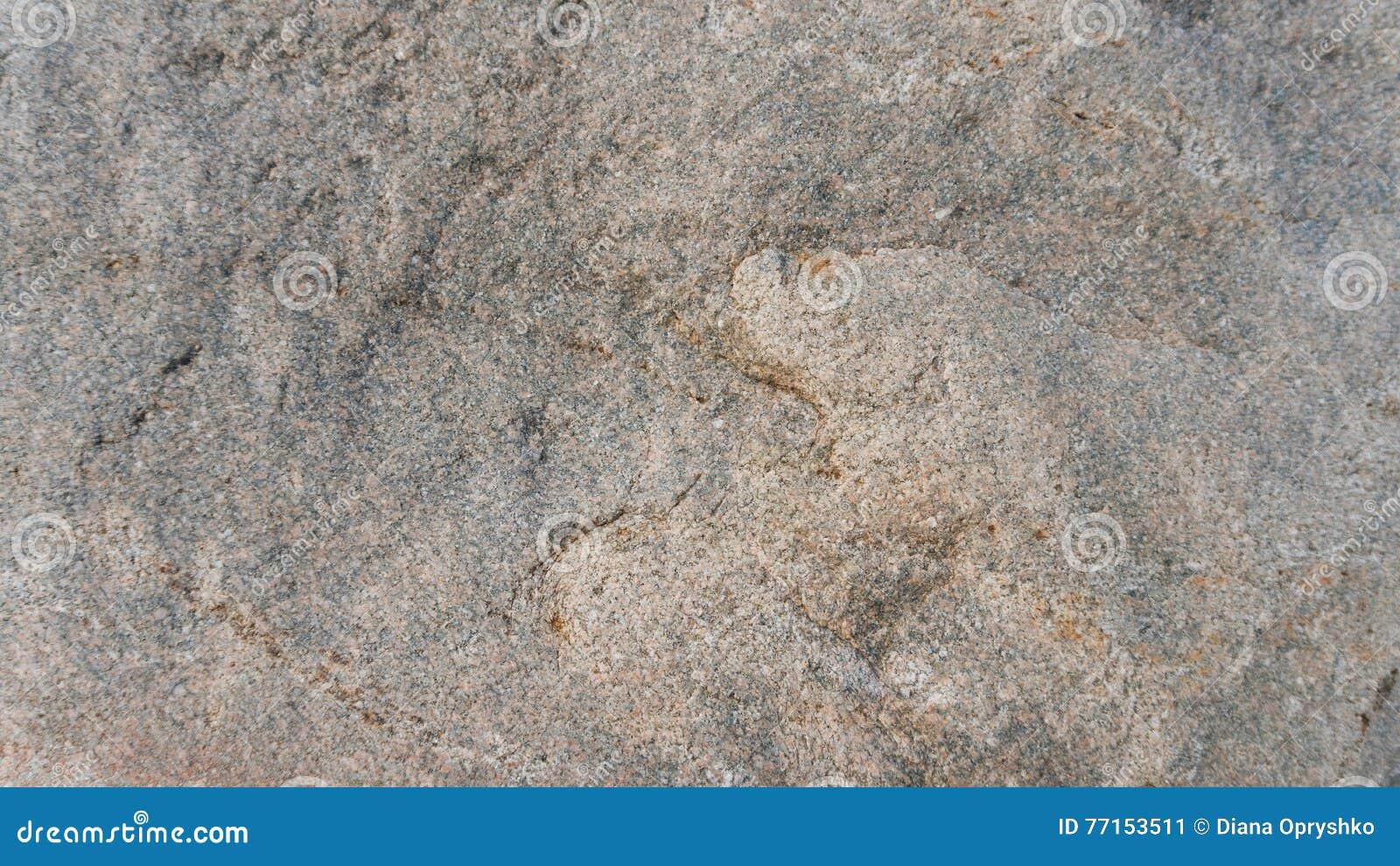 Surface d un granit erratique glaciaire