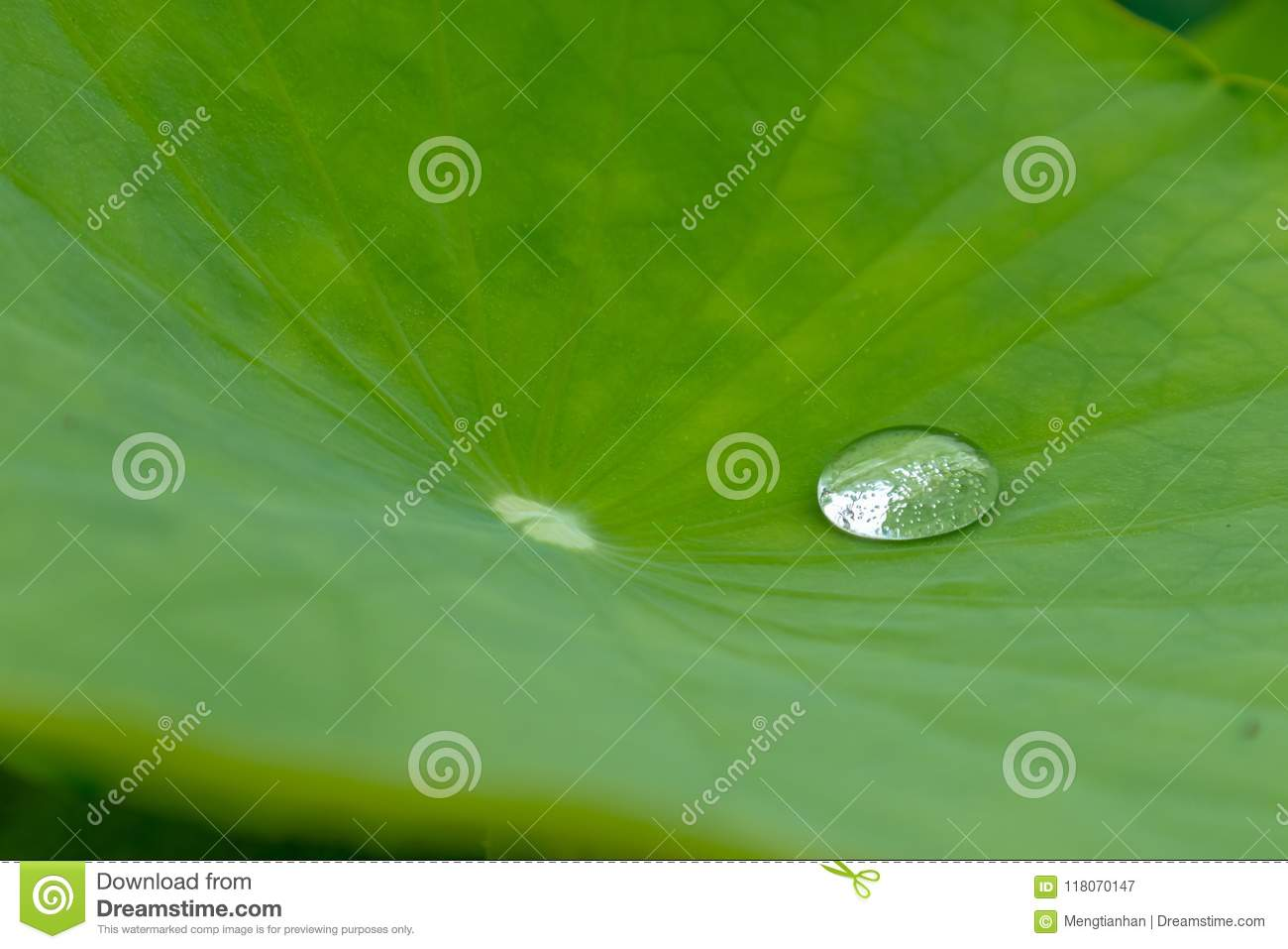 The dew is rolling in the lotus leaf