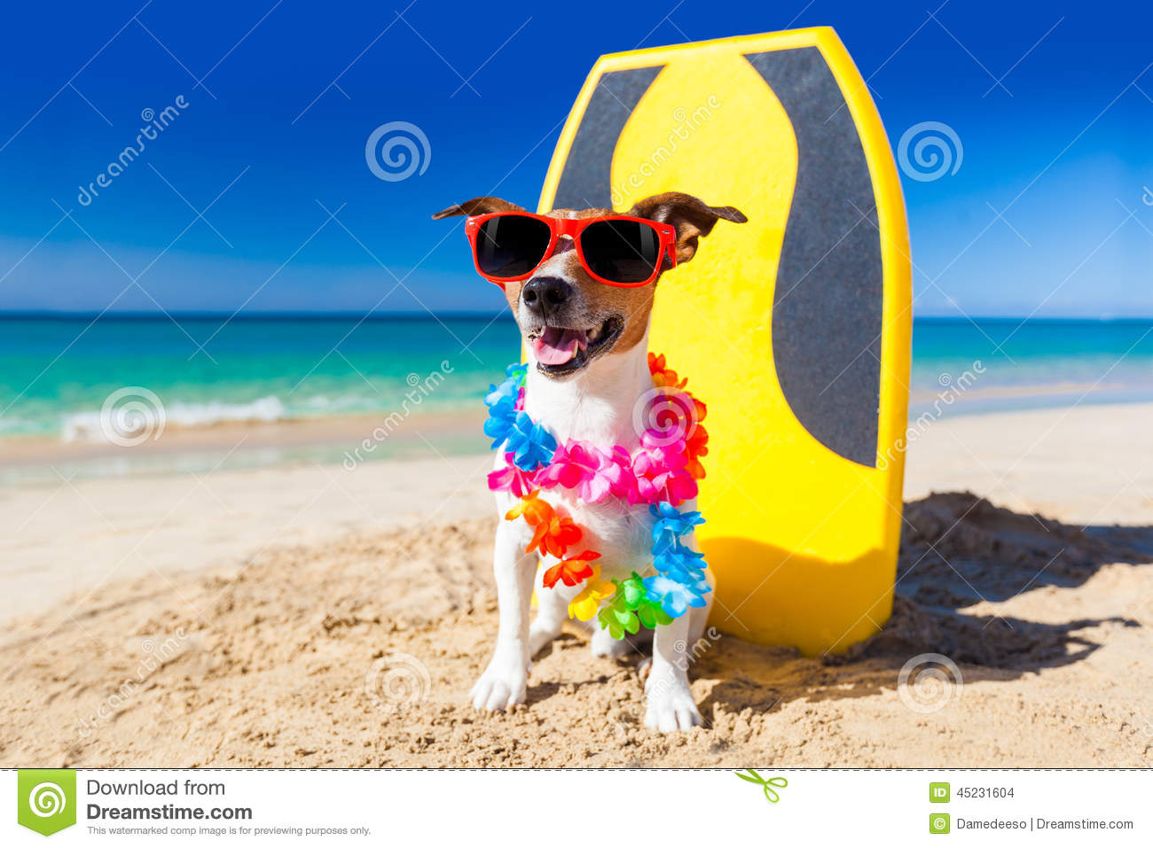 Surfer Dog Stock Photo Image 45231604