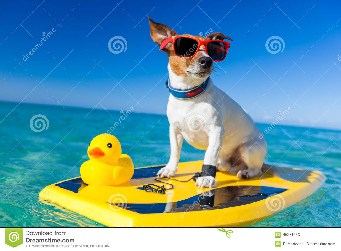 Dog surfing on a surfboard wearing sunglasses with a yellow plastic ...