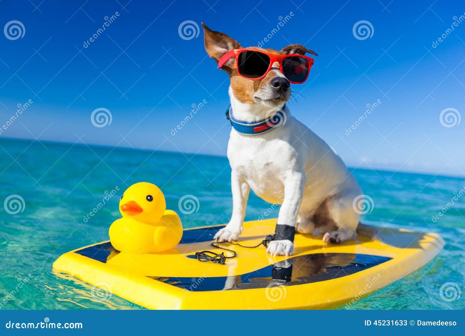 Surfing Dog Stock Image Image Of Isolated Power Shades