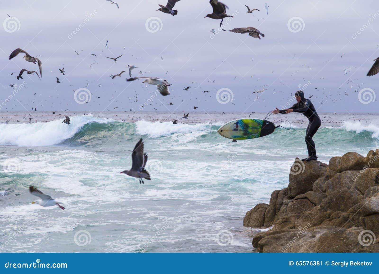 Surfista em rochas entre pássaros de água numerosos gaivotas e pássaros que sentam-se nas rochas, Monterey dos cormorões, Califór