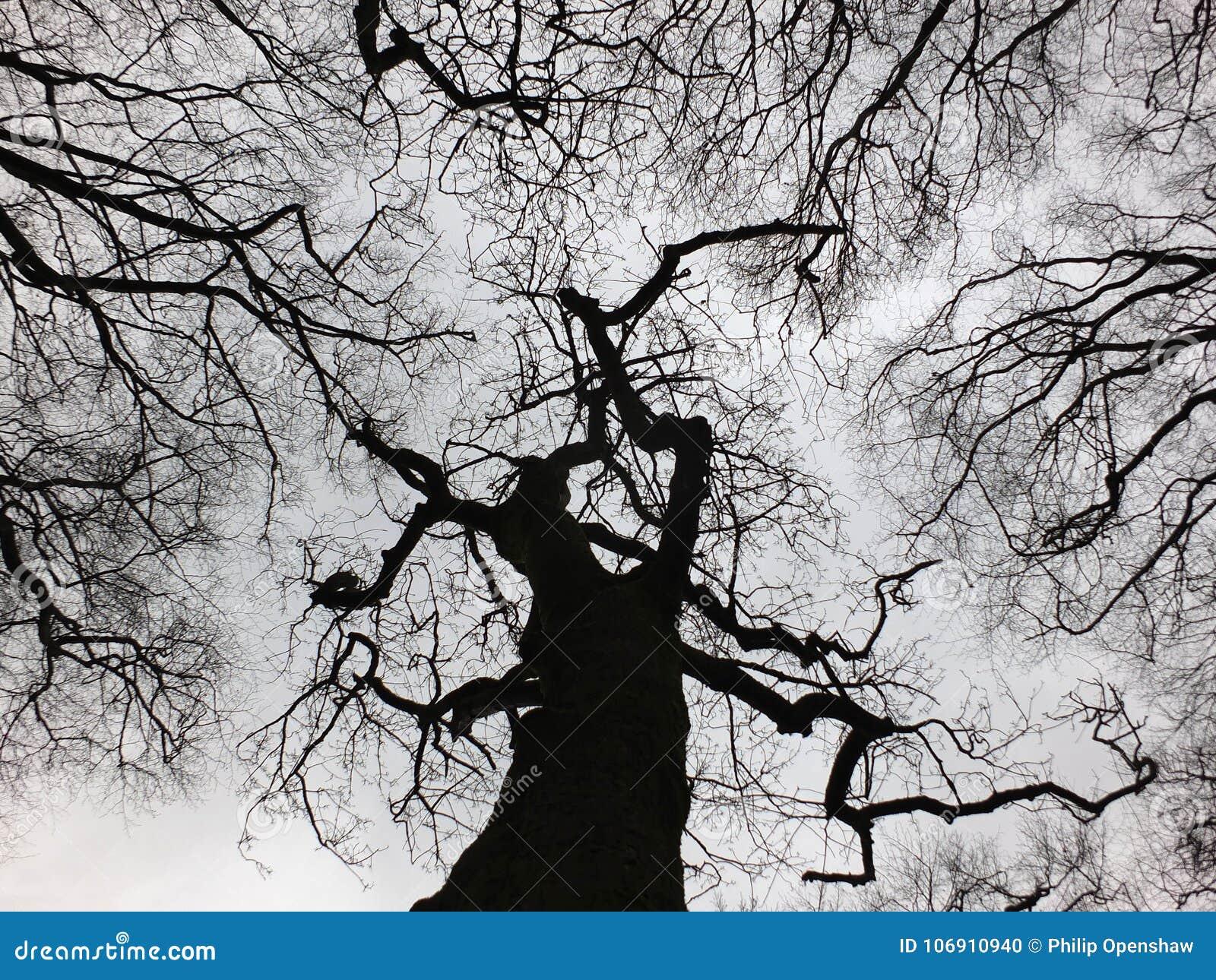 Surowy czarny zimy drzewo i lasowy baldachim z kręconymi gałąź
