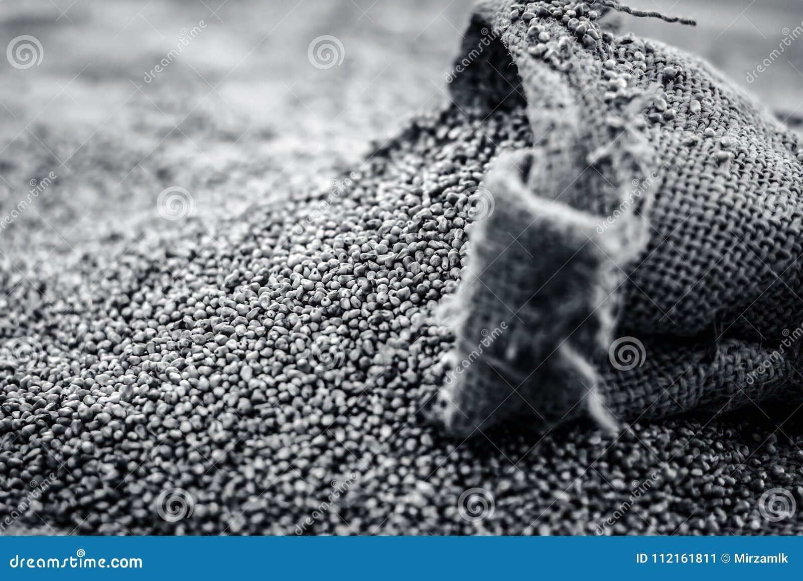 Surowy organicznie Pennisetum glaucum, Perełkowej jagły przybycie z gunny torby Pojęcie głód