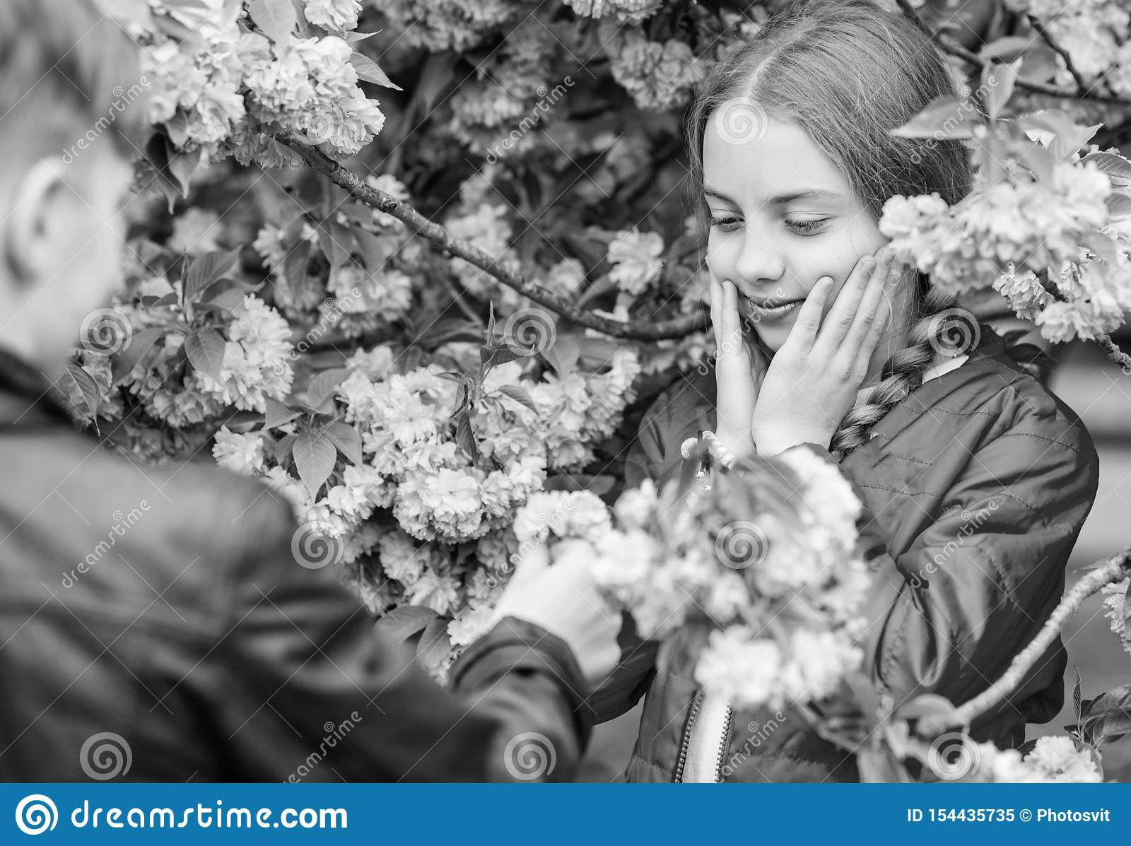 Surpreendente ela Adolescentes rom?nticos Crian?as que apreciam a flor de cerejeira cor-de-rosa Flor macia Acople crian?as em flo