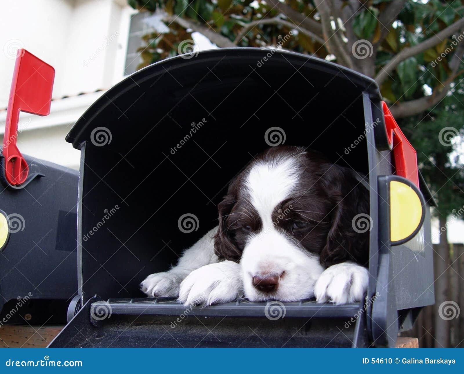 Surpresa grande no correio