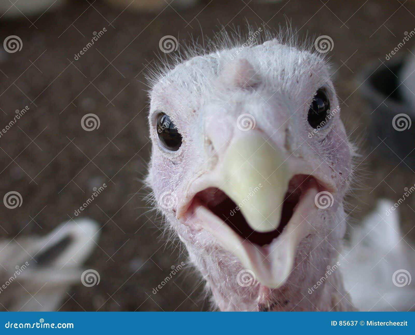 Surprise de birdie