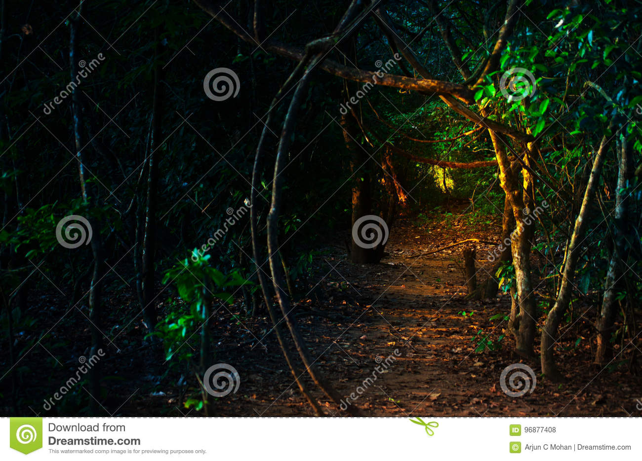 Surreal BoothathanKettu stock photo  Image of trail, fall