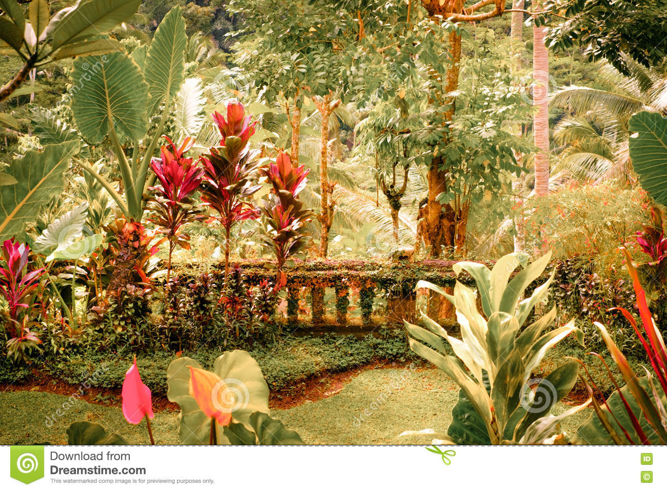 Surreal Colors Of Fantasy Tropical Garden Stock Photo - Image of ...