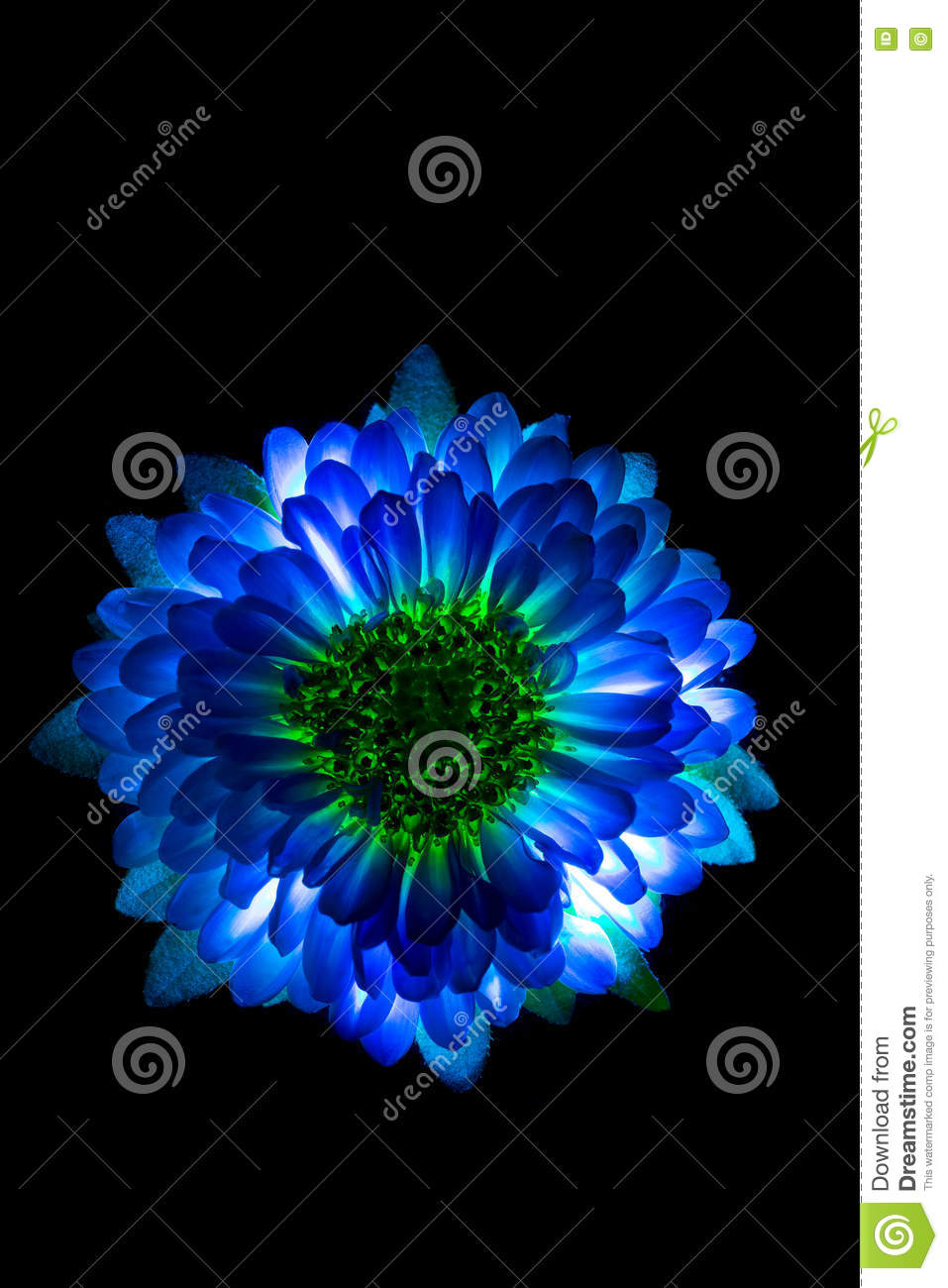 Blue Flower Black Background Wallpaper Hd Wallpaper