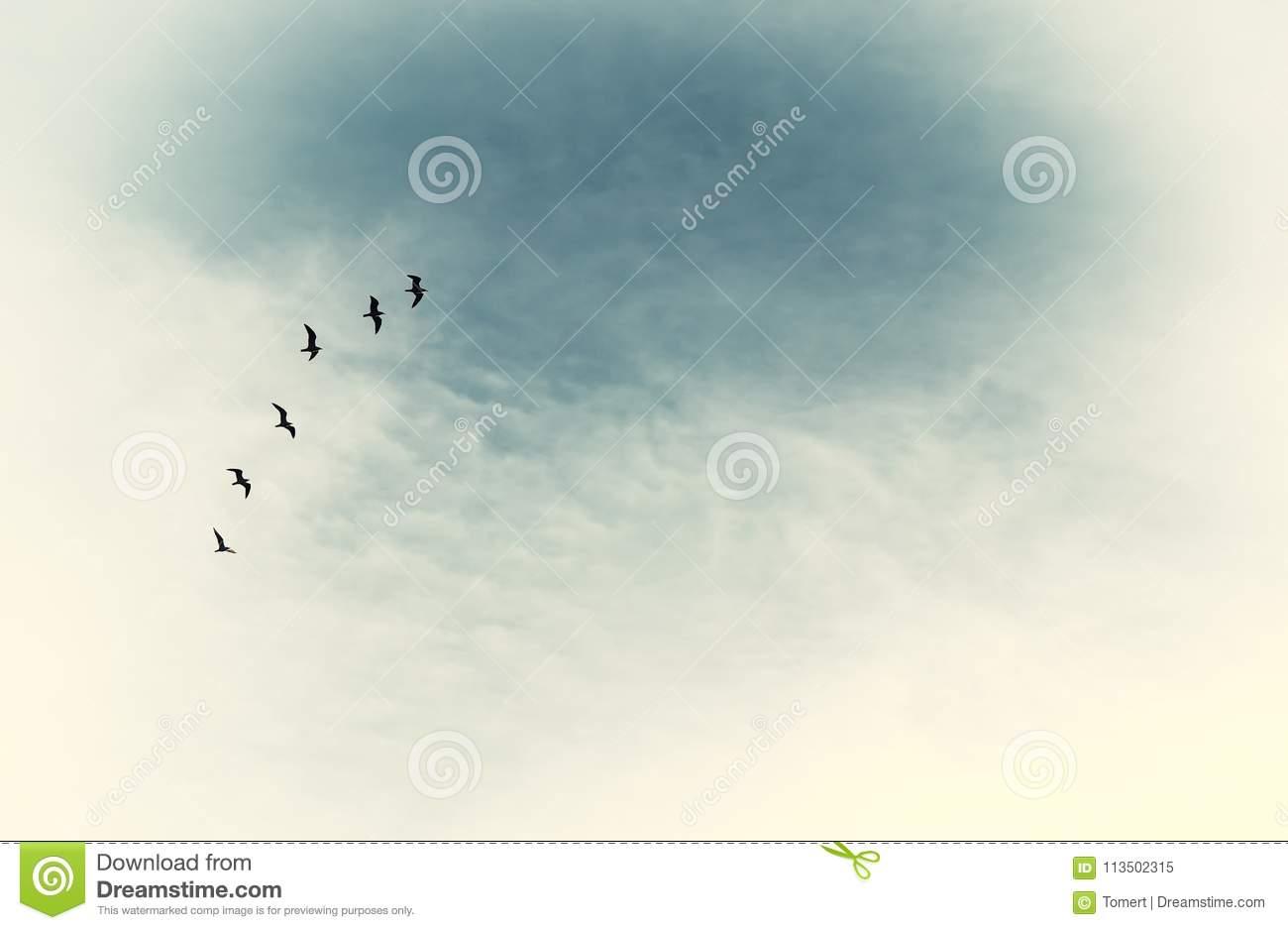 surreal enigmatic picture of flying birds . minimalism and dream concept.