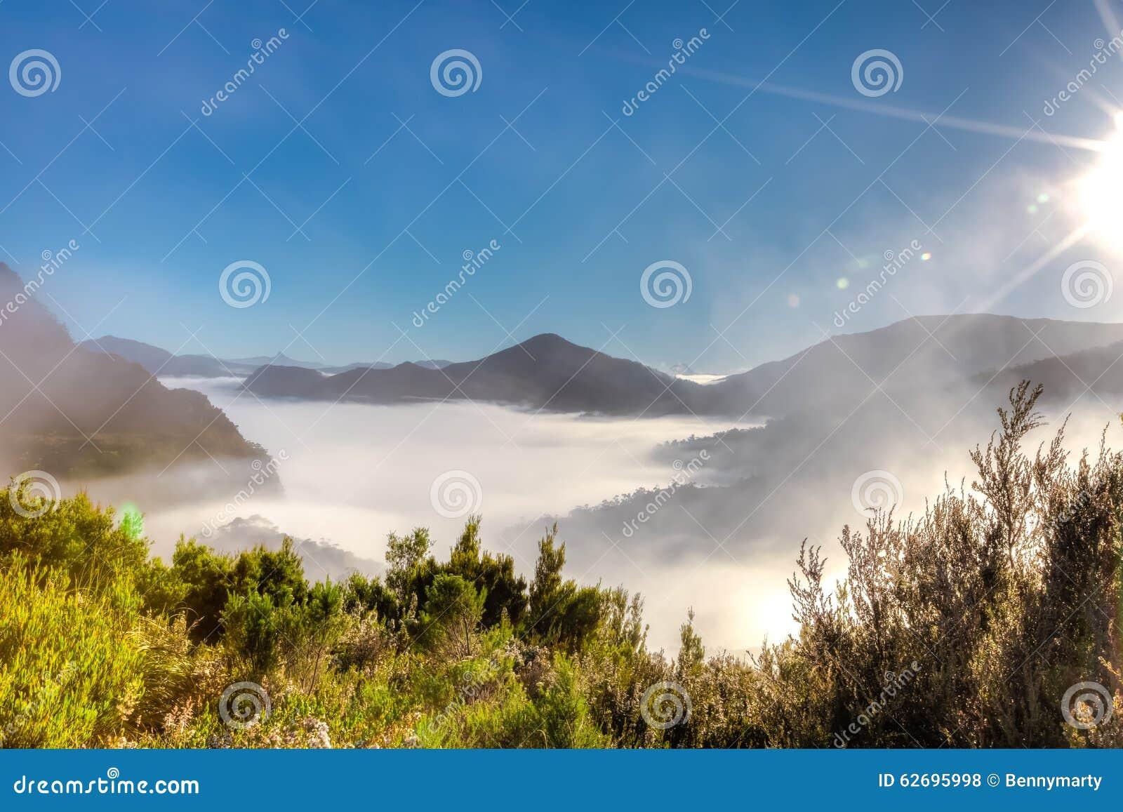 Surreal morning fog