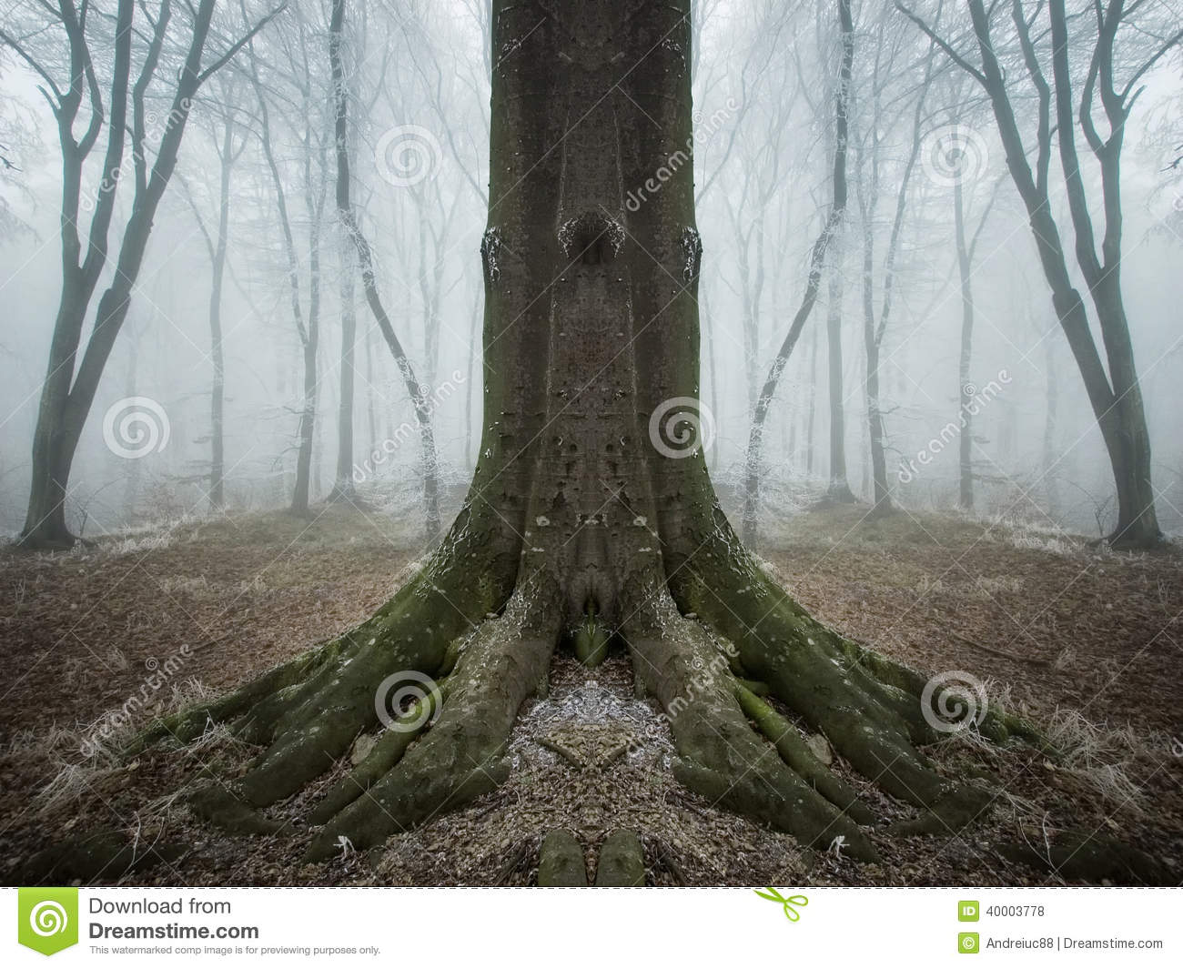 Ec Ee C Z further Surreal Symmetrical Tree Forest Fog Frost Late Autumn also Owl Fantasy Beautiful Wood Forest Tale Fairy Magic together with Amazing Fall Forrest Lovely Nature Picture European Forest Autumn Bavaria Germany Spooky Creepy Atmosphere besides Istock Medium Resized X. on dark spooky forest