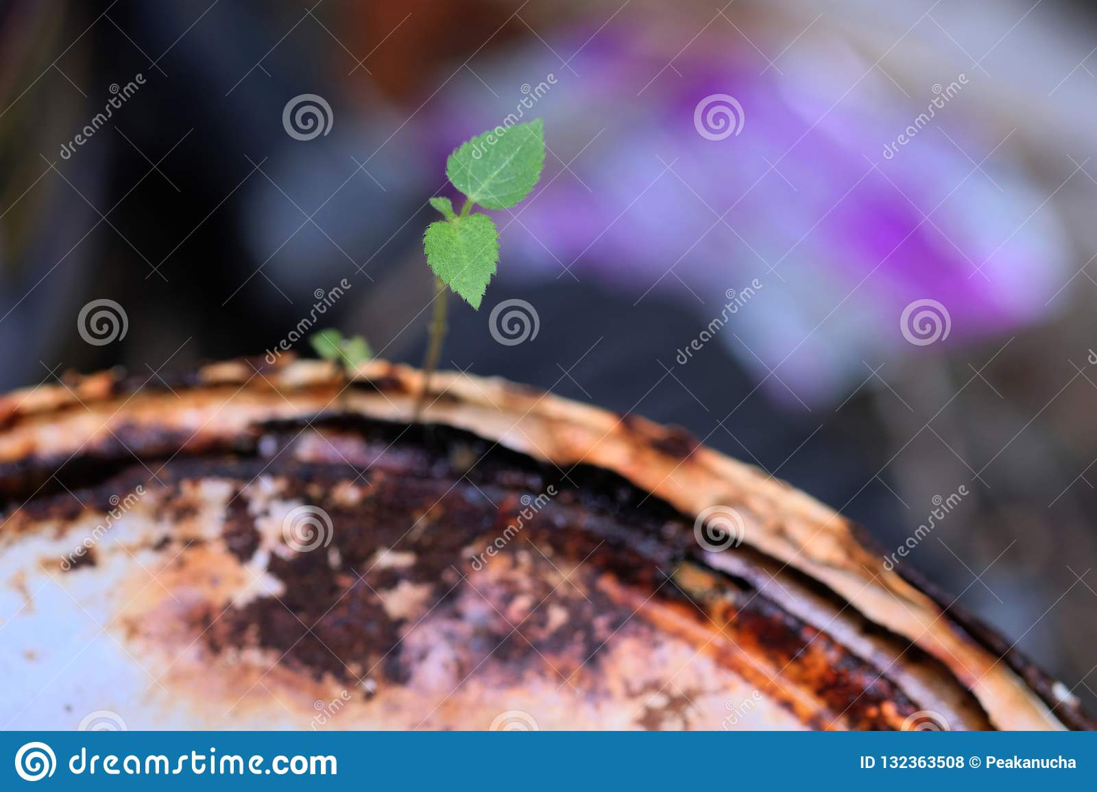 Survival of young plants to grow