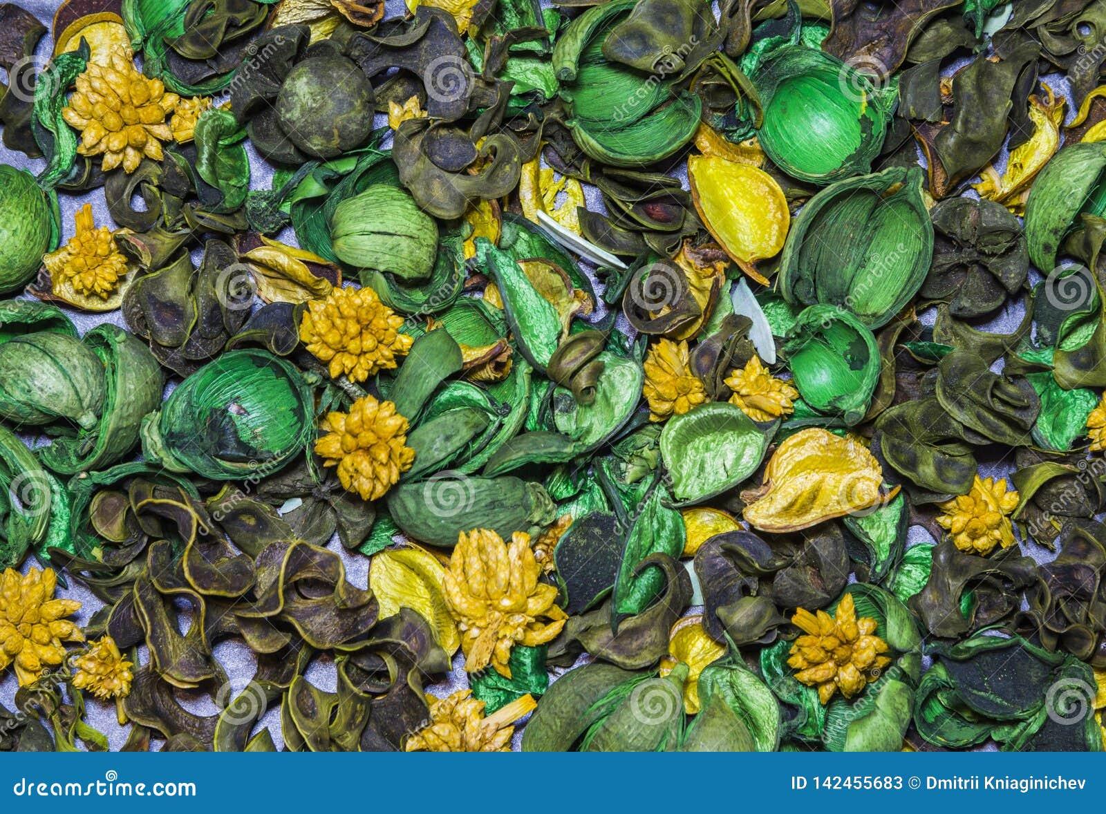 Susi ornamentacyjni kwiaty, owoc, ro?liny asortowany T?o