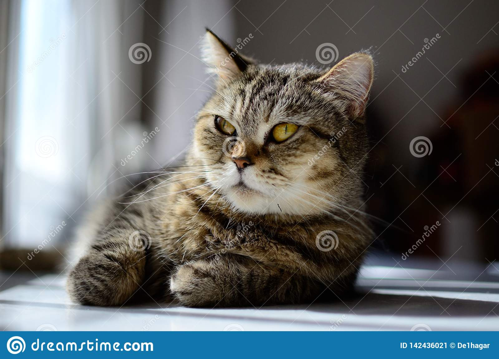 Susi Q het ontspannen kat