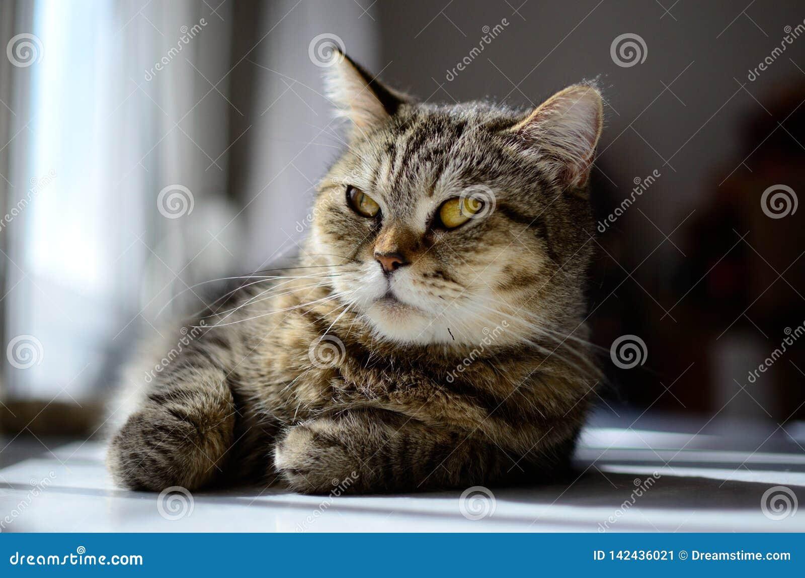Susi Q relaxing cat