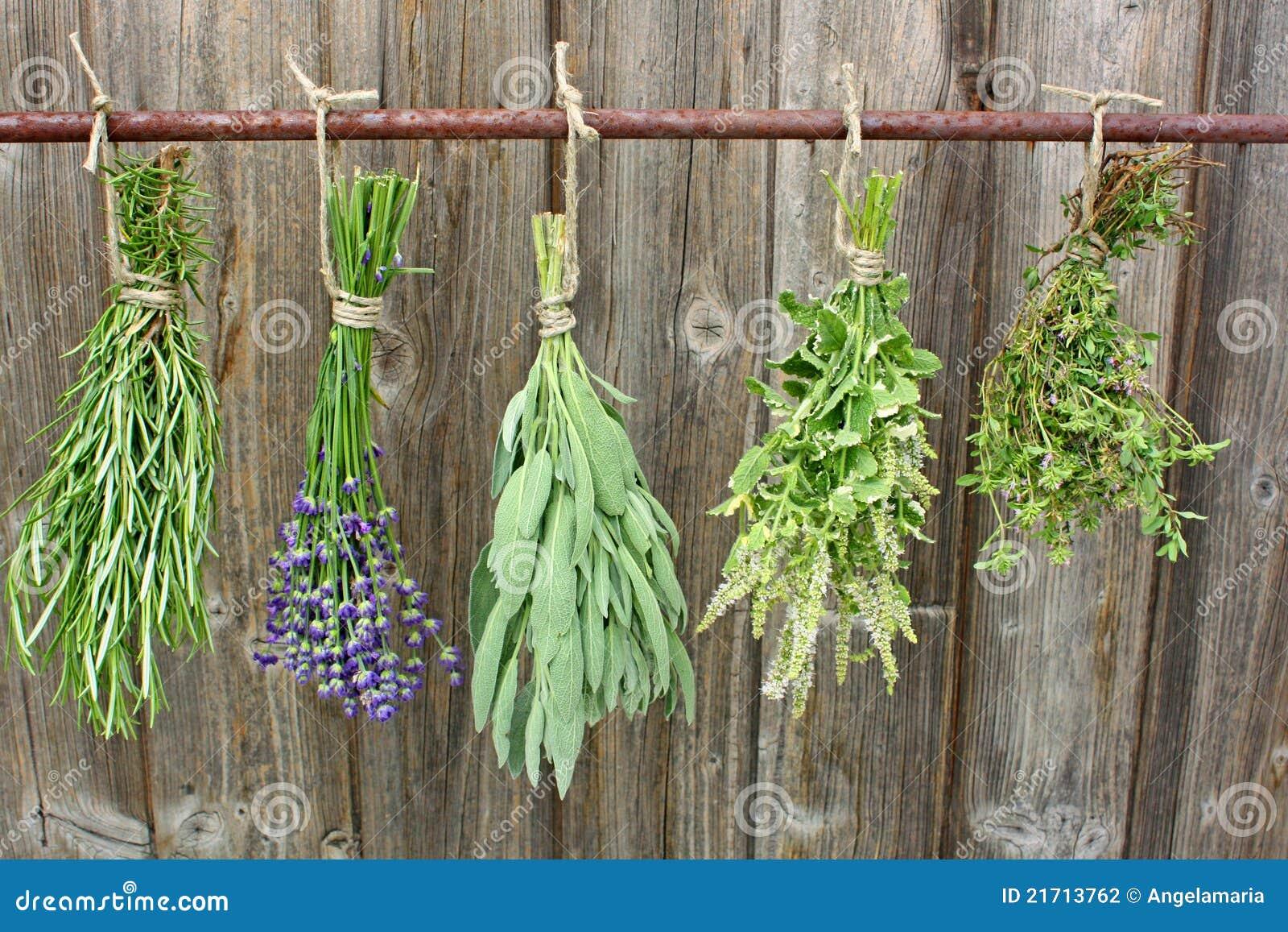 Suszarniczy ziele