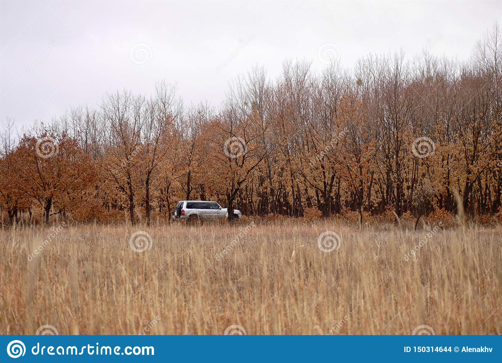 Suv is in the autumn forest in cloudy weather