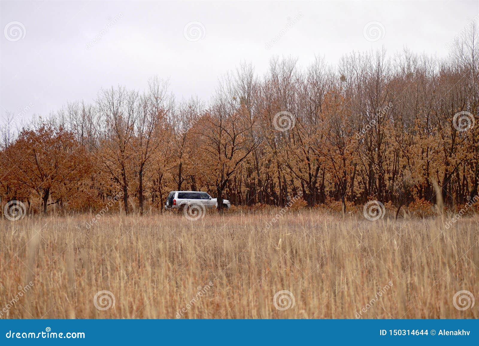 Suv is in het de herfstbos in bewolkt weer