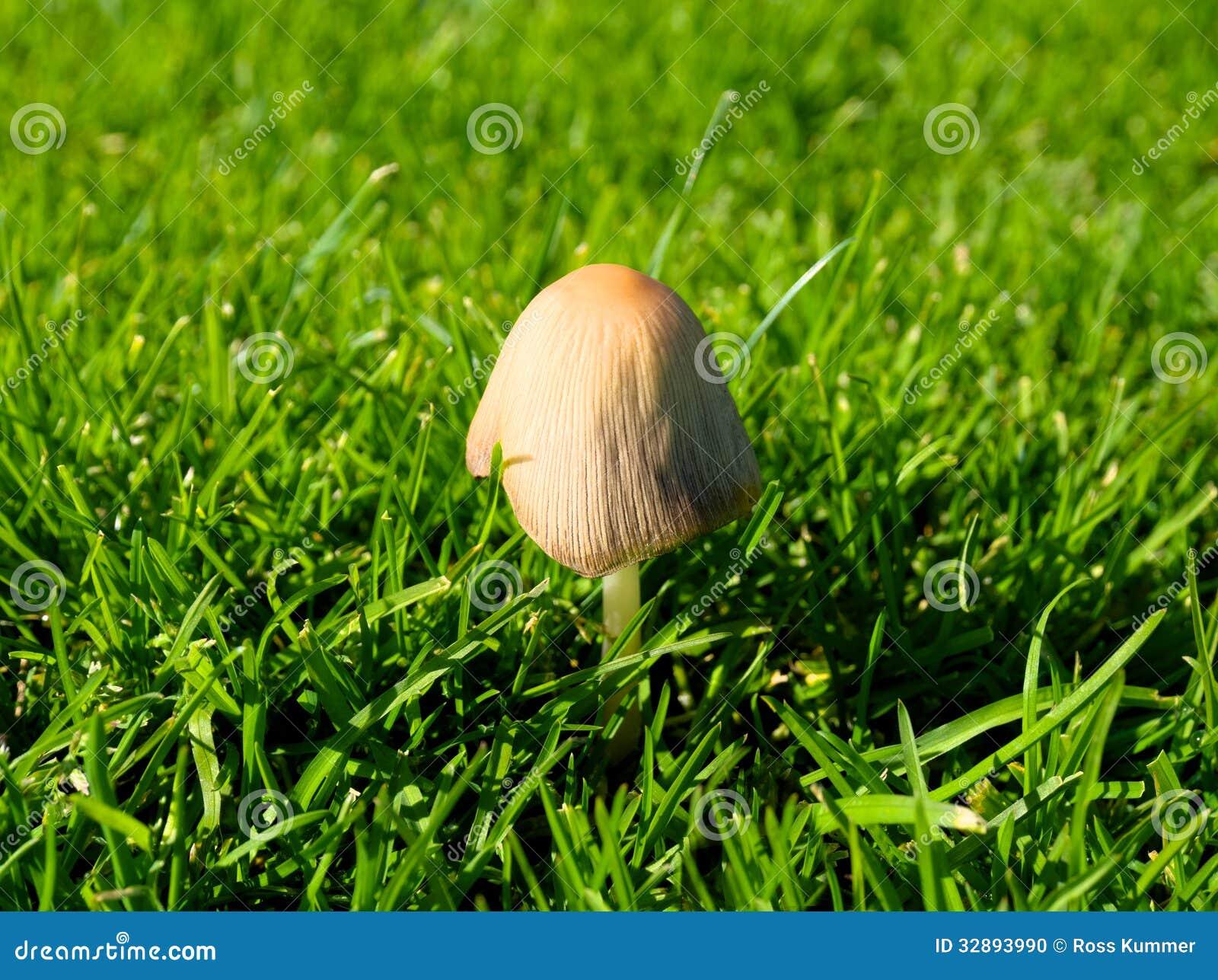recipe: svampar i gräsmattan bilder [24]