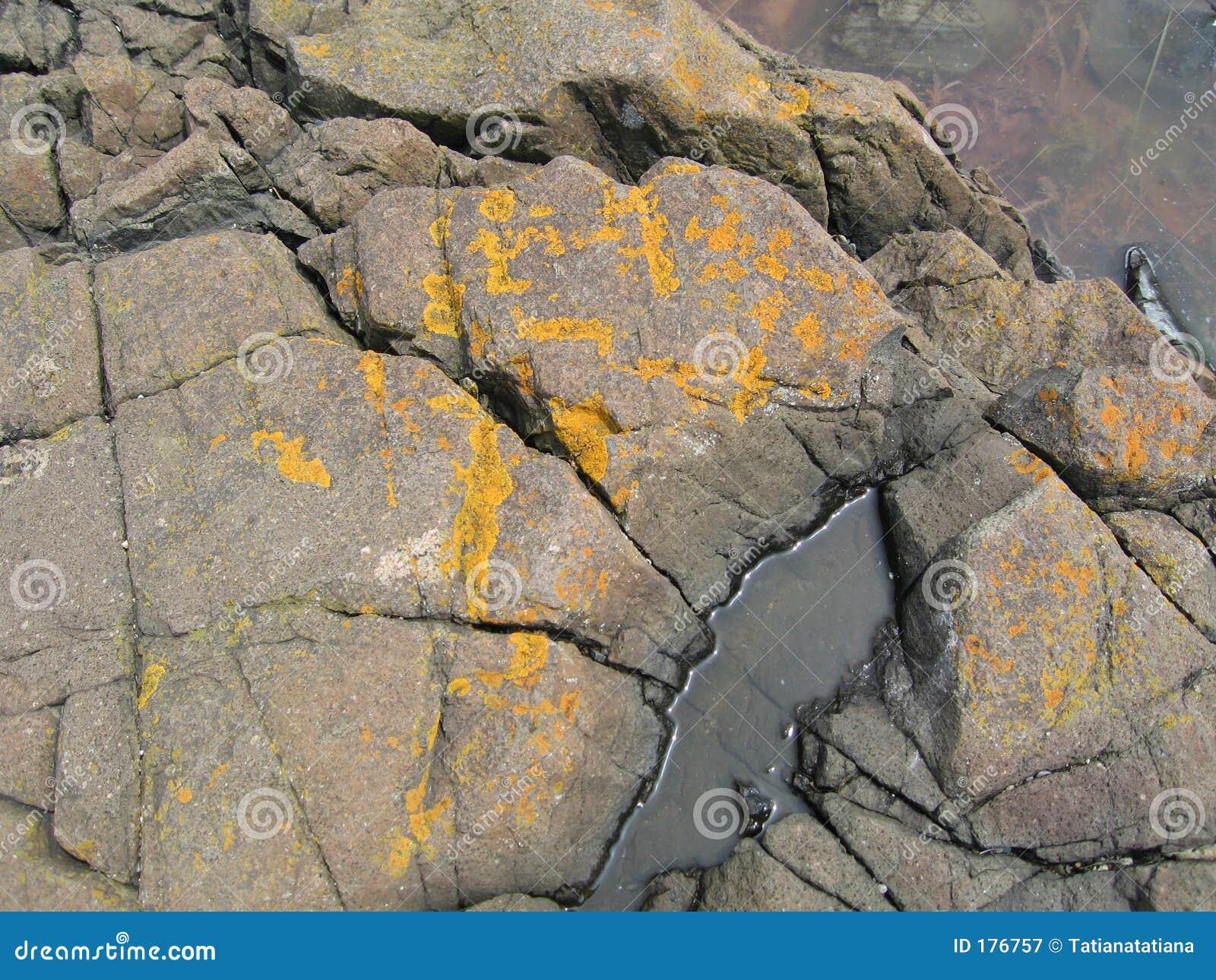 Svamp rocks