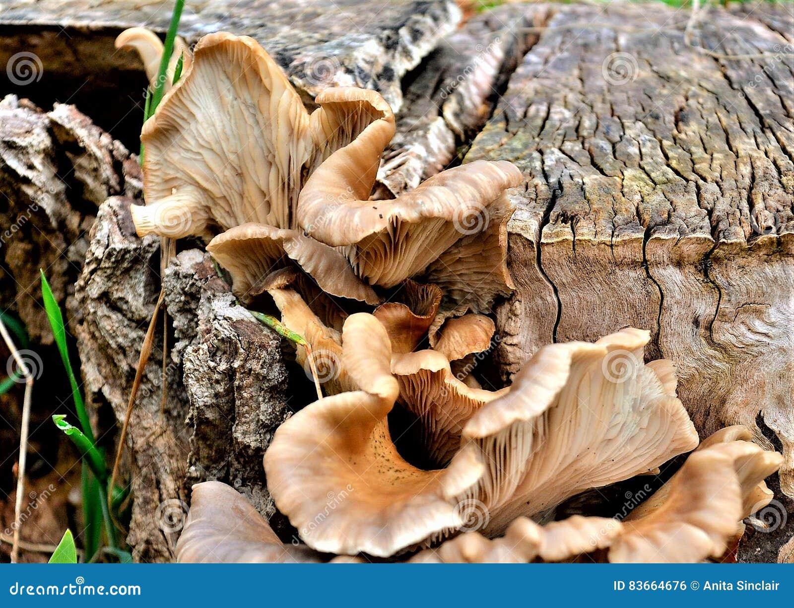 Svamp som växer på en trädstubbe