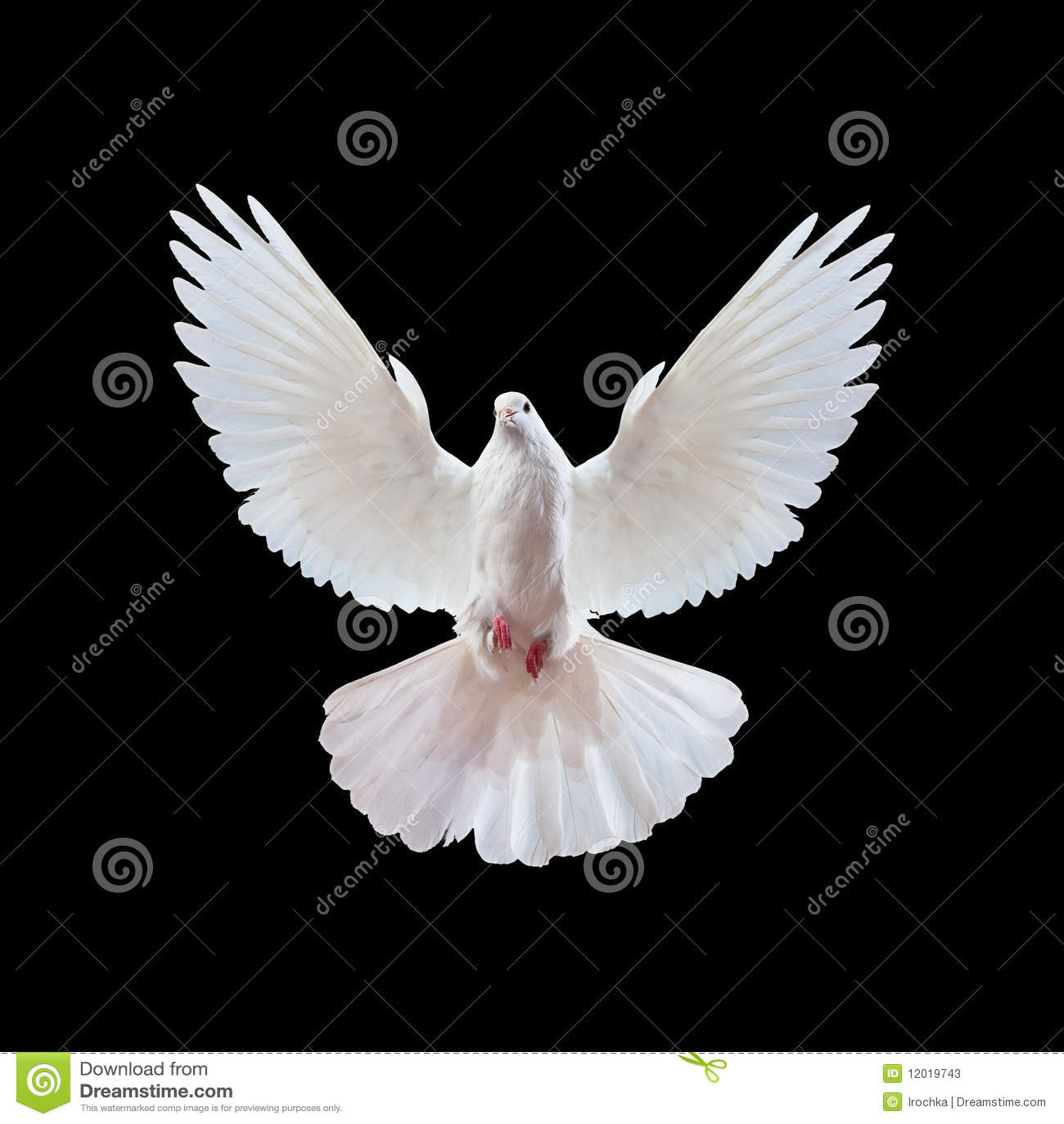 Svart duva som flyger fritt isolerad white