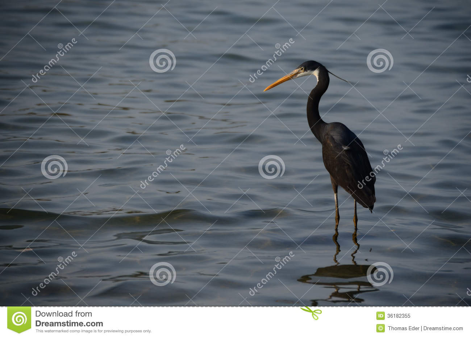 svart h ger i havsblickarna royaltyfri foto   bild 36182355