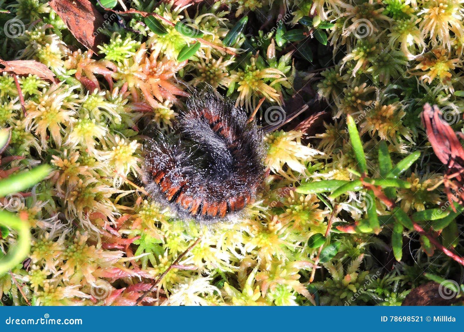Upskirt svart röv