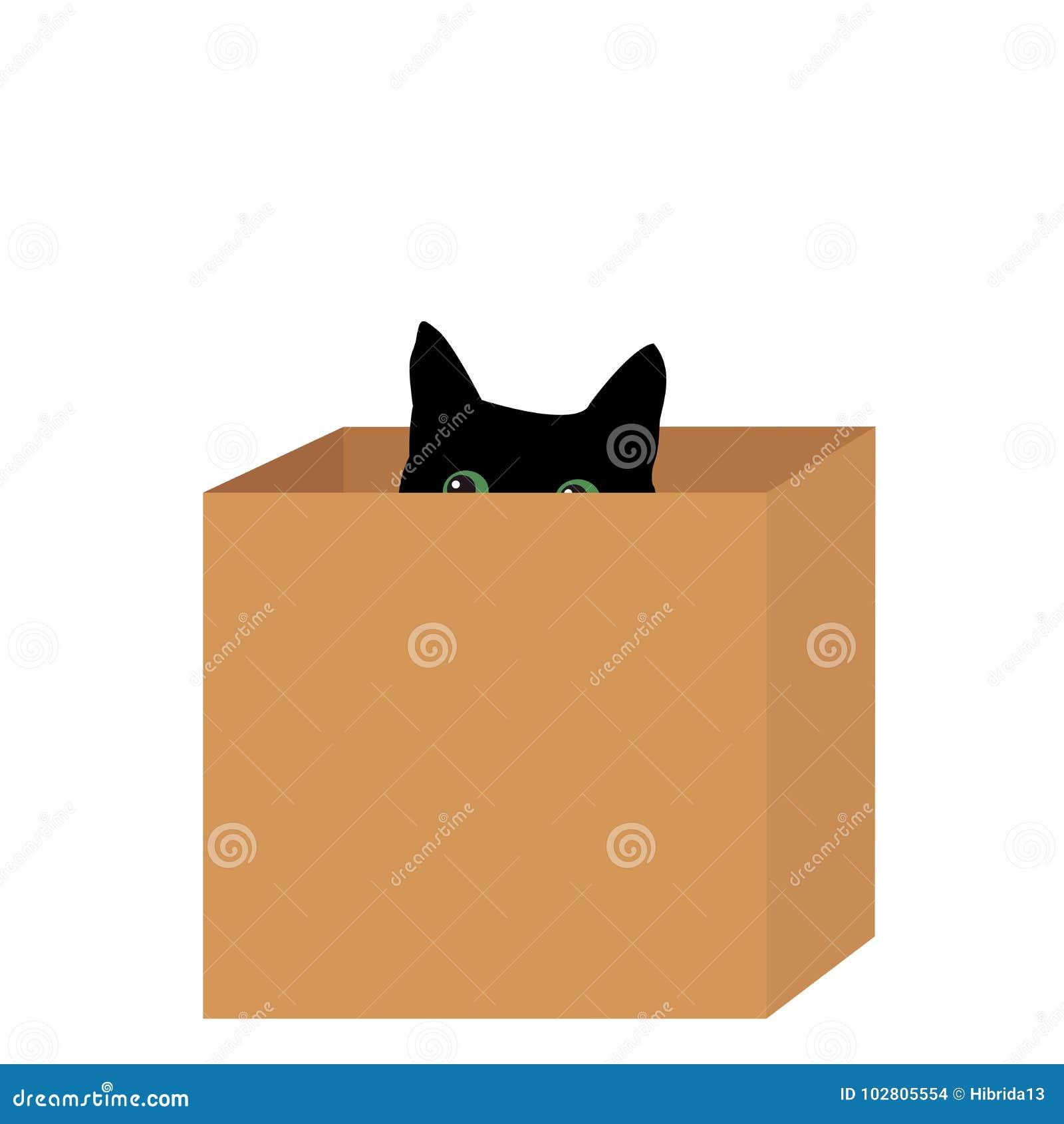Svart katt i en ask