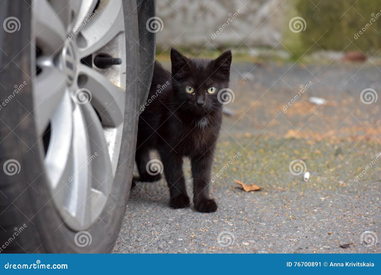 Svart kattunge i gatan