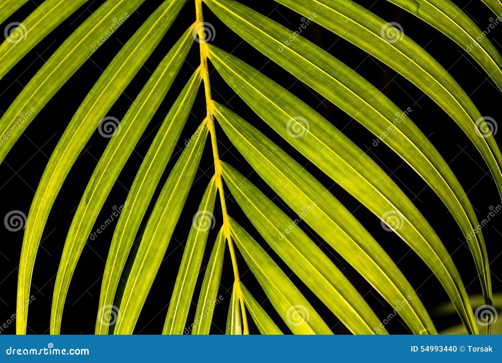 Svart leaf för bakgrund